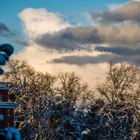 Winter / Kobuleti :: BY theSEA