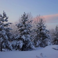 Зимнее утро. :: Вера Литвинова