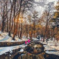 Зима в парке. :: Евгений Мокин