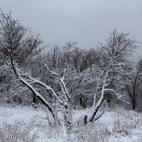 Волгоградская зима :: Dr. Olver ( ОлегЪ )