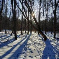 А небо уж весной дышало :: Андрей Лукьянов