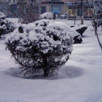 Уголок города зимой :: Анатолий Чикчирный