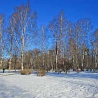 Леоновский парк в Москве :: Ольга Довженко