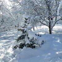 Зимушка-зима :: Валерий Тарасов