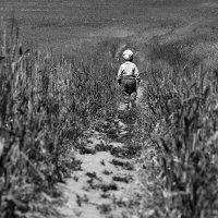 В поле :: Денис Некрасов