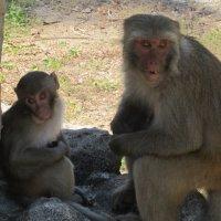 остров обезьян,Вьетнам :: Елена Шаламова