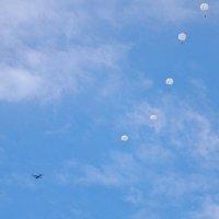 У парашютистов - праздник! :: Елена Хайдукова  ( Elena Fly )