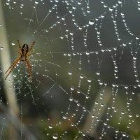 Утреннее ожерелье паутины :: Фёдор. Лашков