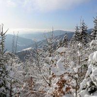 Утро в горах :: tamara *****