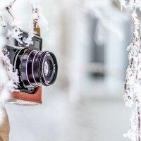Морозный кадр :: Андрей Щетинин