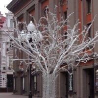 Снежное дерево :: Элен Шендо