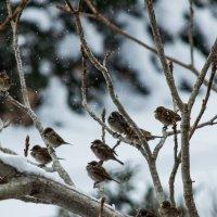 Winter/Kobuleti :: BY theSEA