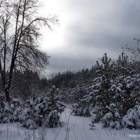 Рождение февральской ностальгии... :: Лесо-Вед (Баранов)