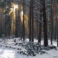 Когда февраль прощался с январём... :: Лесо-Вед (Баранов)
