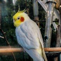 попугайчик ! :: Георгий А