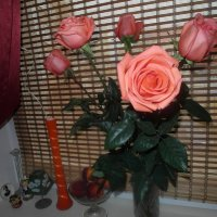 розы :: Владимир