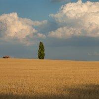 Облака над полем :: Фёдор. Лашков