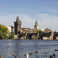Прага :: Elena Ignatova