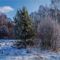 Подмосковная Зима 2020 # 2 :: Андрей Дворников