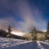 Хомяковщина в зимнюю ночь :: Алексей Медведев