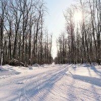 На лесных прогулках в феврале.. :: Андрей Заломленков
