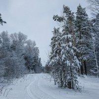 Зимнее :: Виктор Четошников