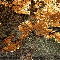 Золотая осень) :: Виктор