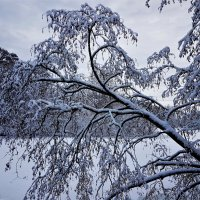 Зимы чарующие грёзы... :: Ольга Русанова (olg-rusanowa2010)