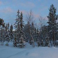 В зимнем лесу :: Ольга