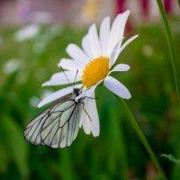 Бабочки-это цветы, которые сорвал ветер :: Ольга Рожкова