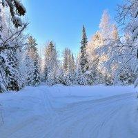 Утро в пихтовом лесу. :: Ич Ни Мигонькин