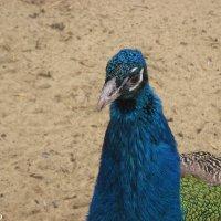 Птичкин портрет :: Нина Бутко