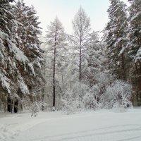Сказочный лес . :: Мила Бовкун
