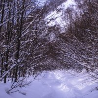 В лесу :: Георгий Морозов