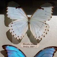 Бабочки :: Татьяна Пальчикова