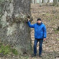 У огромного дуба. :: Валерия Комова
