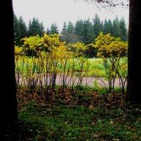 Осенним днём :: Самохвалова Зинаида