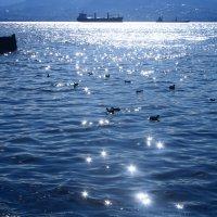 """""""Солнечное""""море.(Январь) :: веселов михаил"""