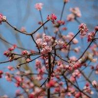 у нас уже почти весна :: Viktor S