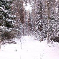 Северная Зима :: Денис Бочкарёв