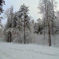 Дыхание уходящей зимы . :: Мила Бовкун