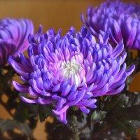 Хризантемы :: Larisa Simonenkova