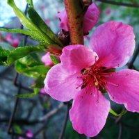 Приближение весны :: Виктория Власова