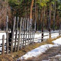 Травою прошлогодней пахнет снег... :: Лесо-Вед (Баранов)