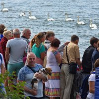 Парад лебедей :: JohnConnor844 N
