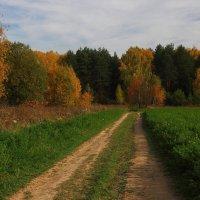 Осенние краски. :: Victor Klyuchev
