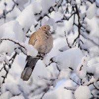 Вид из окна. Зимний гость. :: Виктория Гавриленко