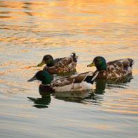 Лето на озере.. :: Евгений