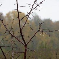 Дождливая пора :: JohnConnor844 N