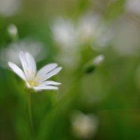 Весна неизбежна... :: Андрей Вестмит